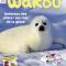 Animaux des poles : les rois de la glace - Wakou Magazine, Janvier 2017