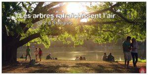 Les arbres de nos villes sont importants pour le bien-être de tous