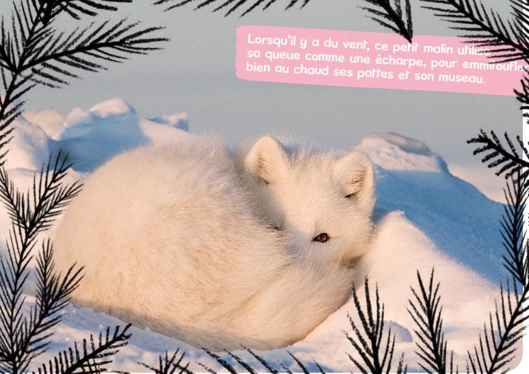 Renard polaire en hiver