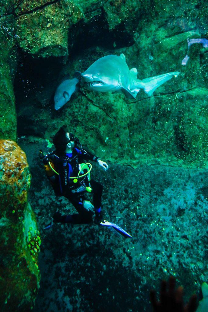 Aquarium des requins, avec un soigneur plongeur, à Nausicaa.