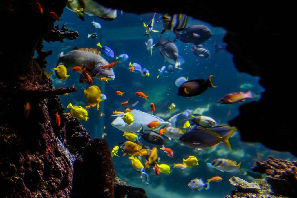 Bassin du lagon, poissons exotiques des récifs, Nausicaa.