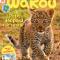Wakou couverture de mai : Petit léopard fait sa star !