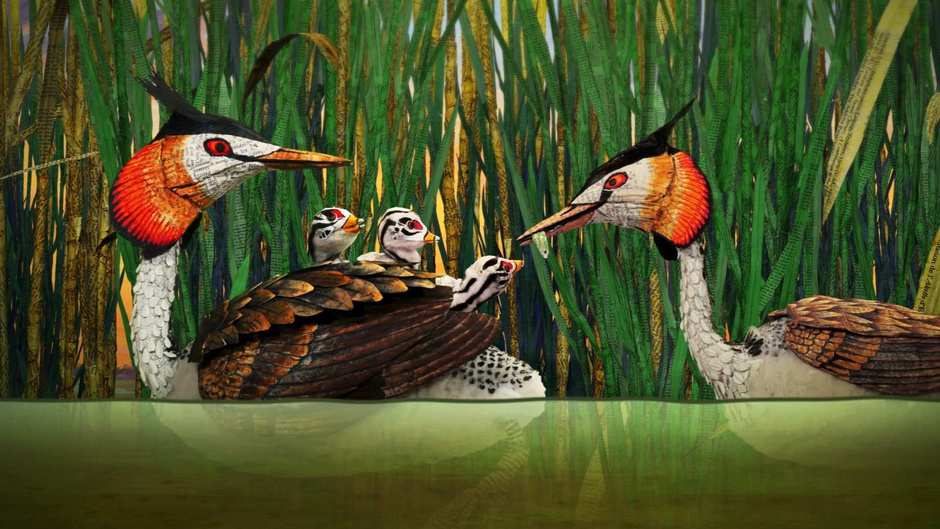 Famille de grèbes huppés