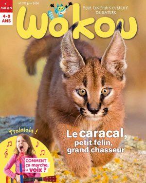 Le caracal, petit félin, grand chasseur ! Wakou magazine
