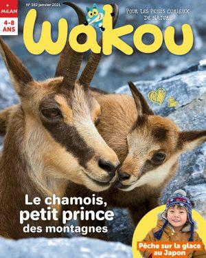 Le chamois - Wakou magazine