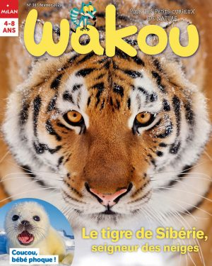 Le tigre de Sibérie - Wakou magazine