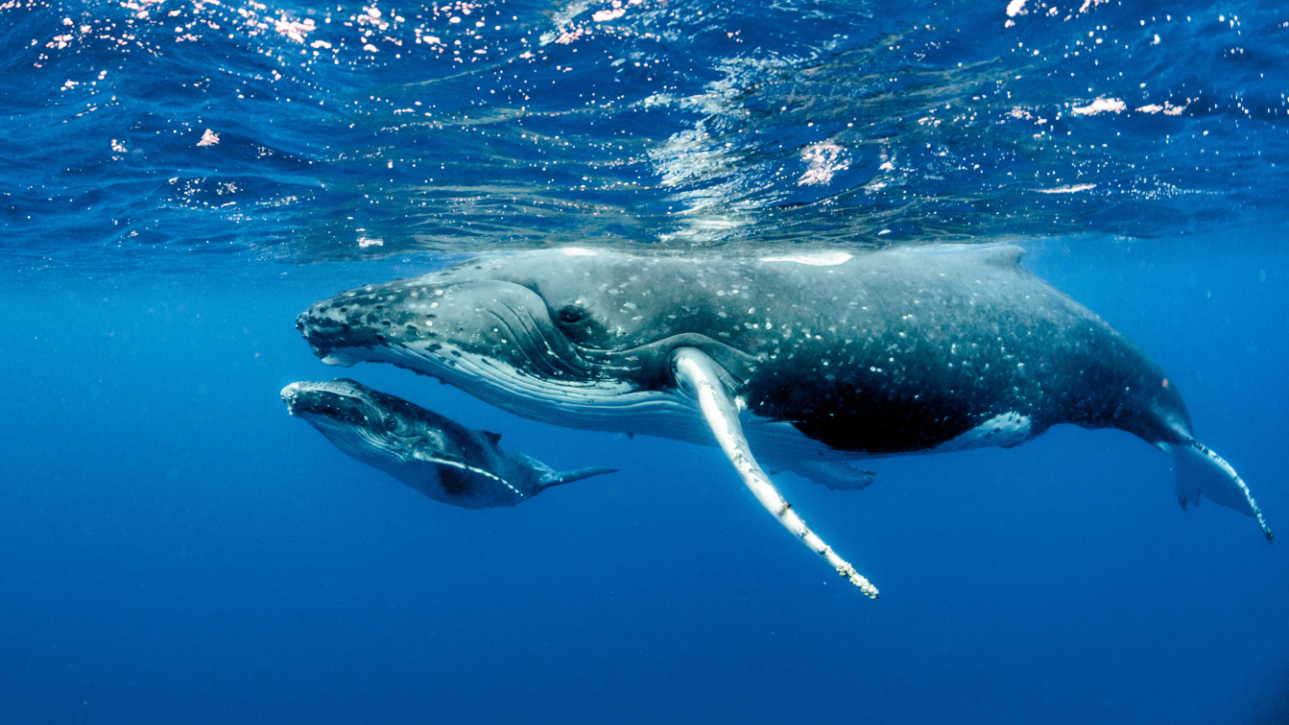 baleine, série, disney, national geophraphic