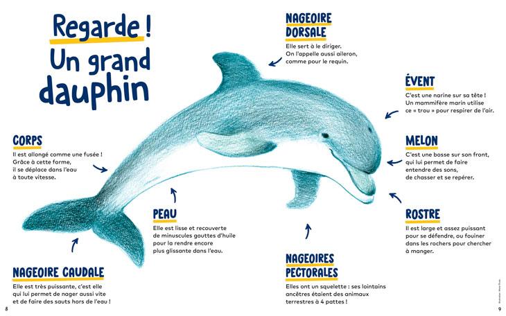Les dauphins - Wakou magazine