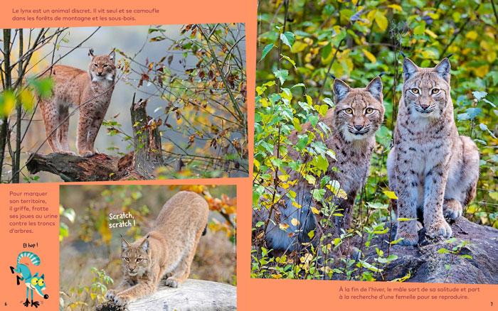 Le lynx repère une proie - Wakou magazine